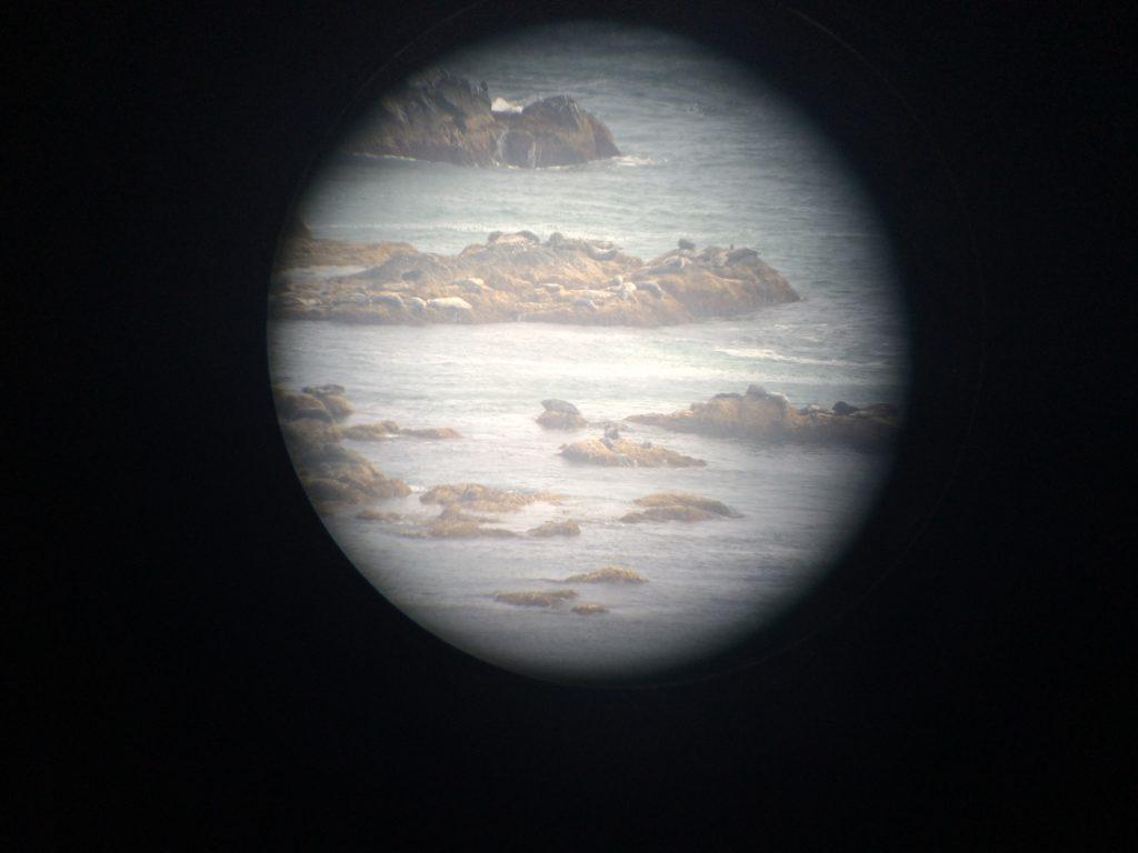 風の館の双眼鏡からゼニガタアザラシを見る