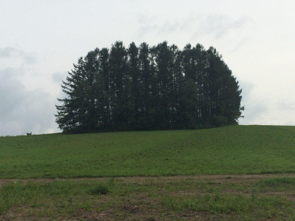 もう一つのマイルドセブンの丘