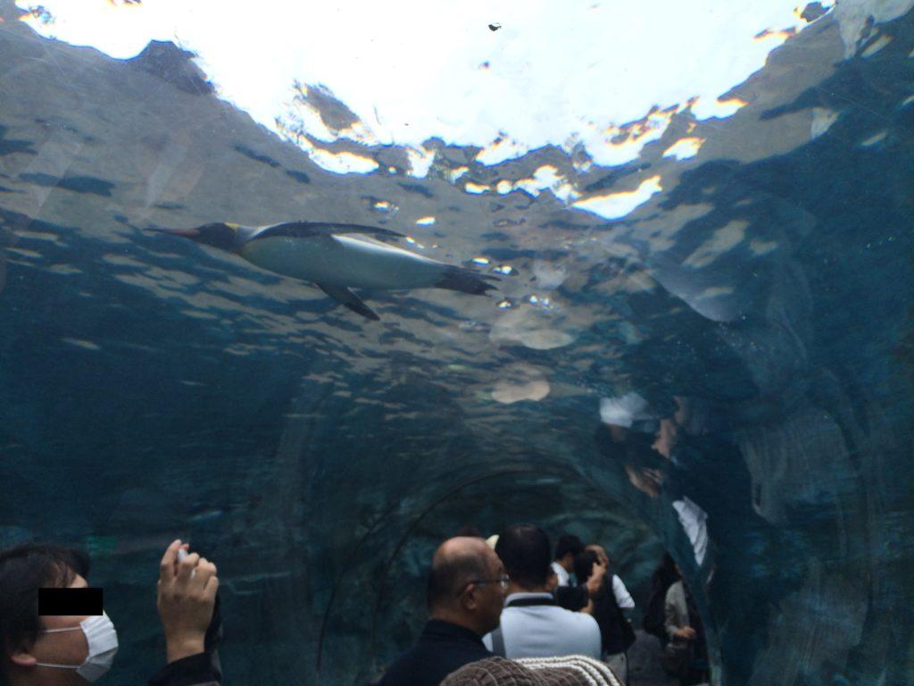 ペンギン(旭山動物園)
