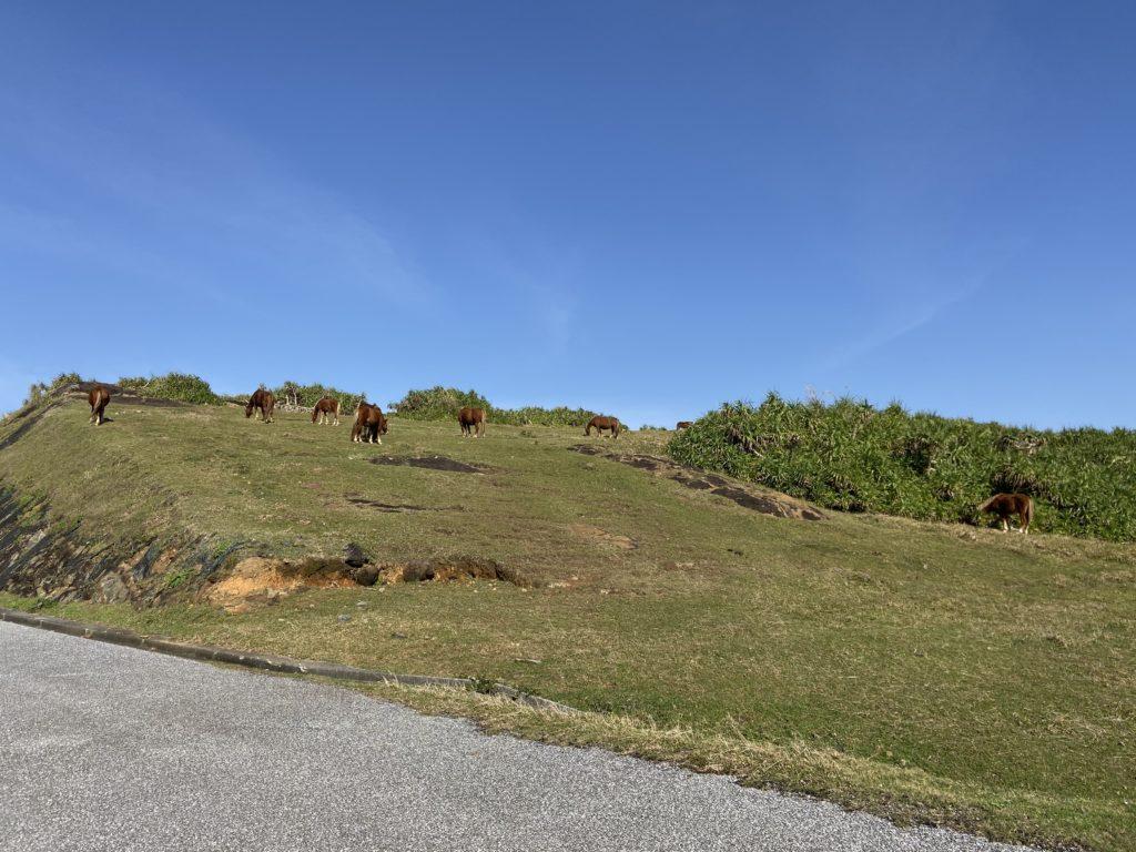 与那国島の馬